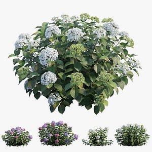hydrangea plant set 32 model