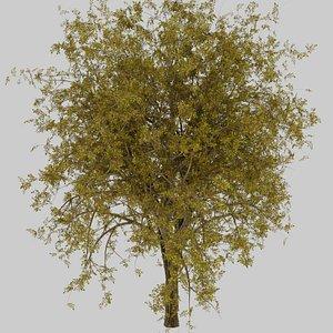 3D model Tree Collection - Blender Sapling