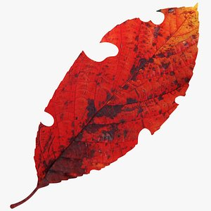 3D model Cherry Leaf V1