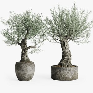 old olive trees stone model