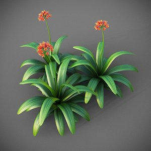 3D model XfrogPlants Bush Lily - Clivia Miniata