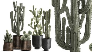 Cactus set in a rusty flowerpot for the interior 992 3D
