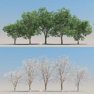 3D 5 oak tree