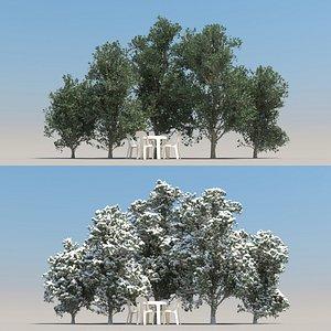 3D model summer citrus tree leaf