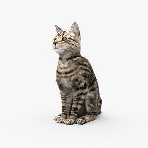 3D Sitting Cat HD