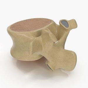 lumbar spinal column 3D model