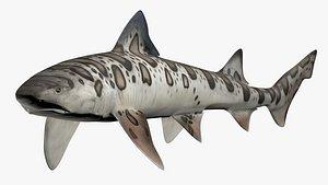 Leopard Shark 3D model