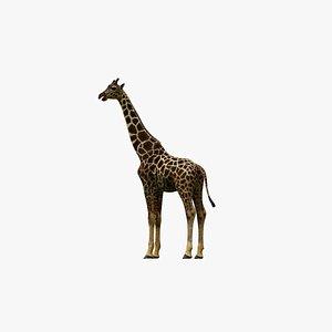 animal mammals giraffe model