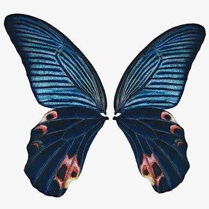 3D Papilio Protenor Wings Male model