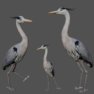Heron Bird 3D