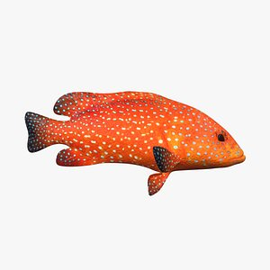 Roving Coral Grouper 3D model