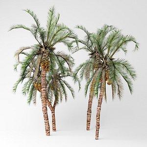 Date palms 3D model