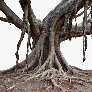 3D Ficus Tree 5x16k TexturesRAW 3D Scan model