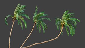 3D palm cocos