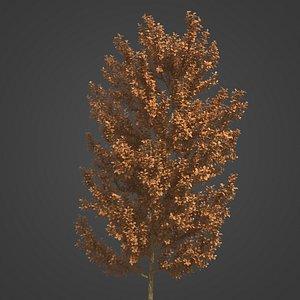 2021 PBR Laurel Collection - Laurus Nobilis 3D model