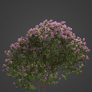 3D model 2021 PBR Crape Myrtle Collection - Lagerstroemia Indica