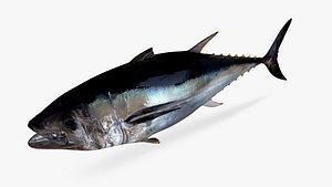 pacific bluefin tuna 3D model