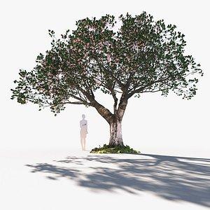 3D cherry tree mature prunus avium E