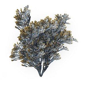 3D Egg Wrack seaweed H1