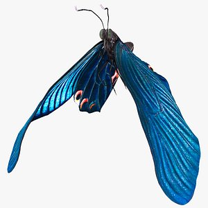 3D Animated Papilio Butterfly Flapping Wings Rigged model