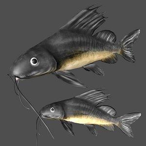 3D catfish