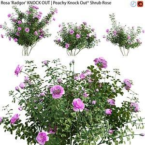 3D Rosa Radgor KNOCK OUT - rose 02 model