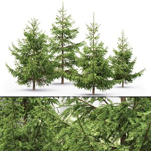 3D spruce tree nature model