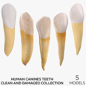 Human Canines Collection - 5 models model
