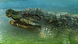 3D model crocodile 3
