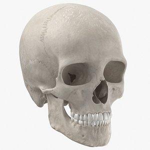 3D real human skull cranial