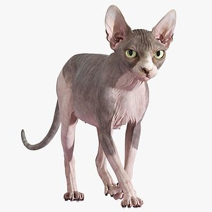 sphynx cat walking pose model
