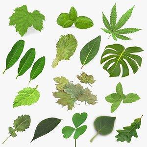 leaves 11 model