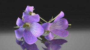 violet flower wildflower 3D