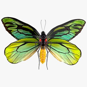 Animated Flight Ornithoptera Alexandrae Butterfly Fur 3D model