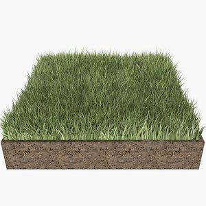 grass bluegrass lawn 3D model