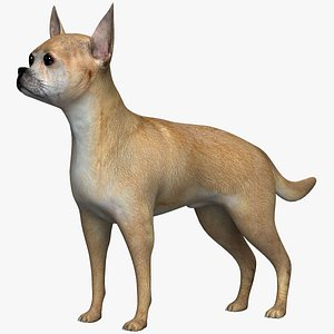 dog animal mammal 3D model