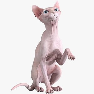 sphynx cat sitting pose model