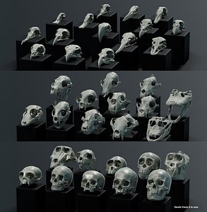 3D Skulls Pack 3 in 1  model