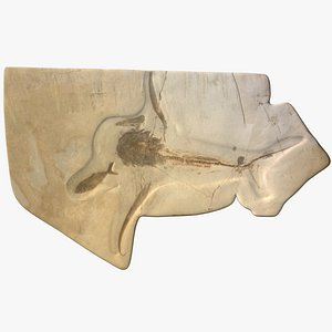 fossil aquilolamna milarcae eagle model