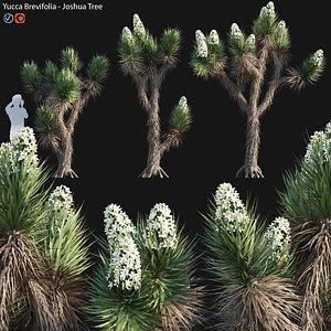 3D Yucca brevifolia 01