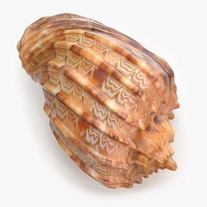 3D Harpa Kajiyama Seashell