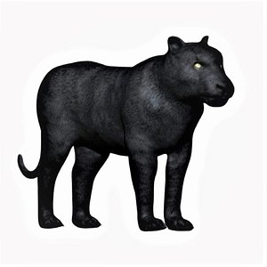3D fully rigged black panther
