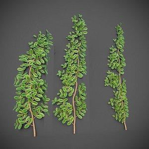 3D model XfrogPlants Pacific Poison Oak - Toxicodendron Diversilobum