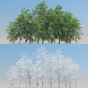 summer betula tree leaves 3D model