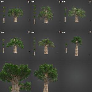 3D 2021 PBR Baobab Collection - Adansonia Digitata model