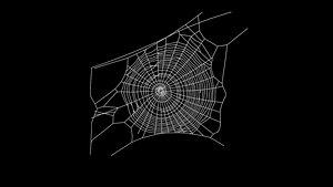 3D Spider Web model