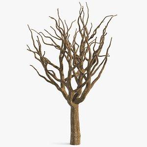 pistachio tree trunk 3D model