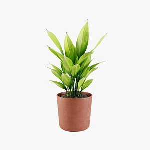 aspidistra plant 3D