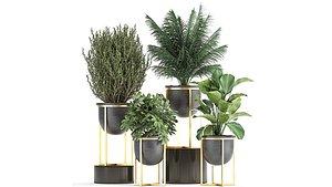 plants decorative 3D model
