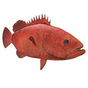 3D Grouper fish